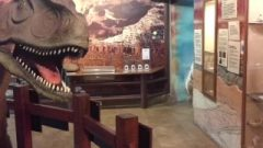 Creationism Museum Public Blow-Job